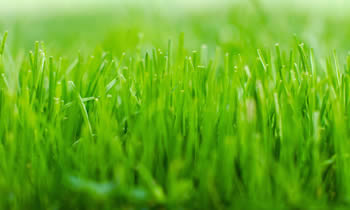 Lawn Service in Denver CO Lawn Care in Denver CO Lawn Mowing in Denver CO Lawn Professionals in Denver CO