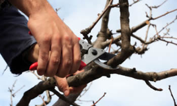 Tree Pruning in Denver CO Tree Pruning Services in Denver CO Quality Tree Pruning in Denver CO