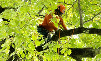 Tree Trimming in Denver CO Tree Trimming Services in Denver CO Tree Trimming Professionals in Denver CO Tree Services in Denver CO Tree Trimming Estimates in Denver CO Tree Trimming Quotes in Denver CO